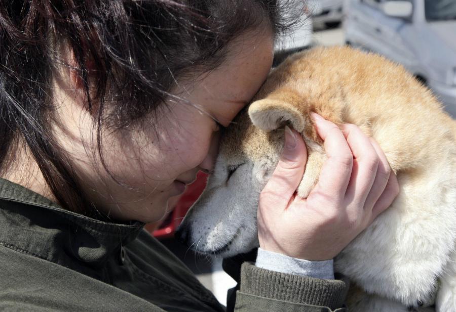 животные лечат сердце