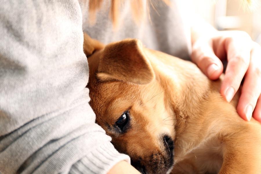 собака лечит сердце